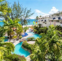 Bourgainvillea Barbados