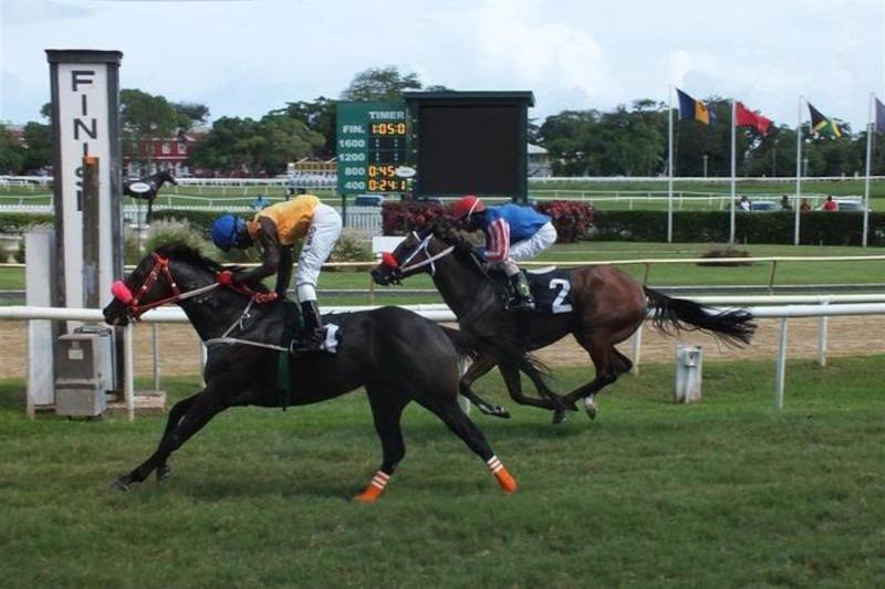 Barbados Horse Racing